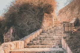 The Satisfied Life - Psalm 91 - Olive Tree Blog